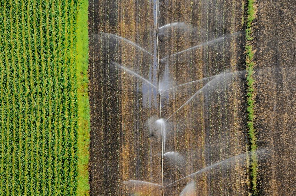 Agricoltura oltre 1700 domande per aprire nuove imprese for Eventi in toscana oggi