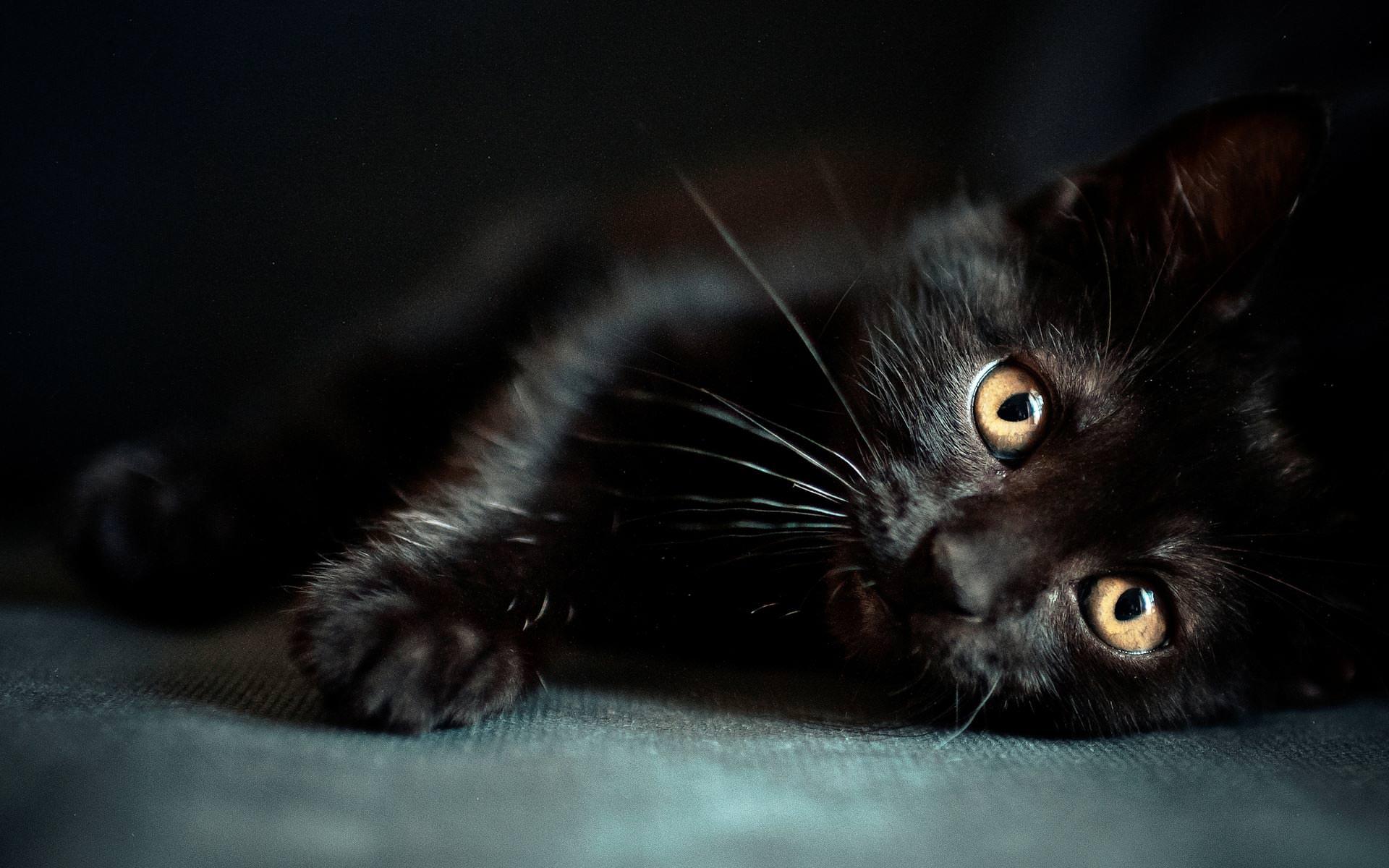Petizione contro la strage di gatti neri ad Halloween