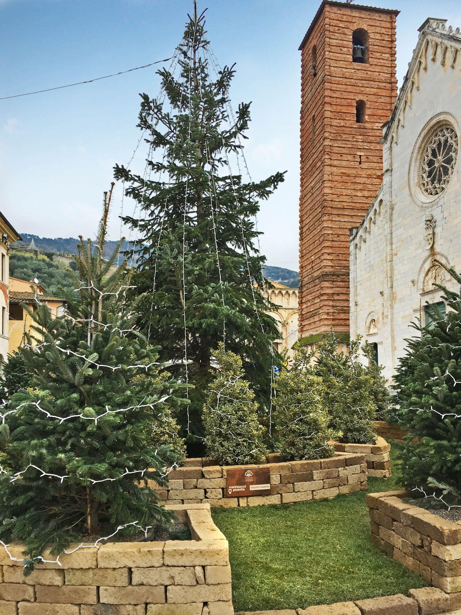Da Pistoia il verde veste a festa la piazza di Pietrasanta