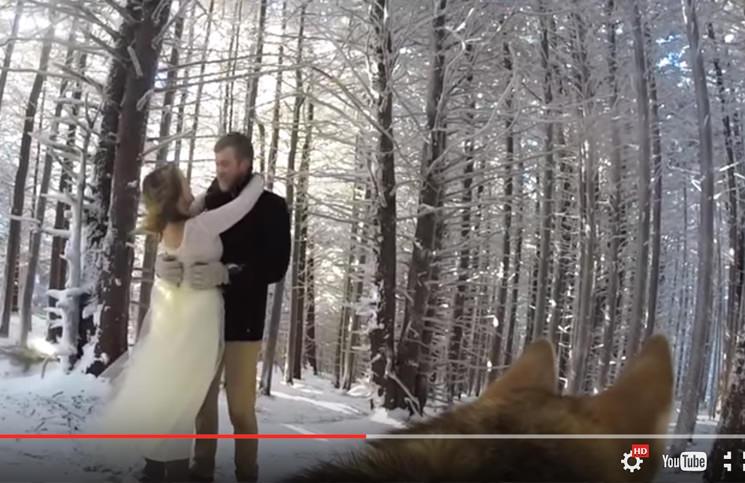 Un Meraviglioso Video di Matrimonio… girato da un Cane