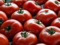 Cancro alla prostata sconfitto dai pomodori