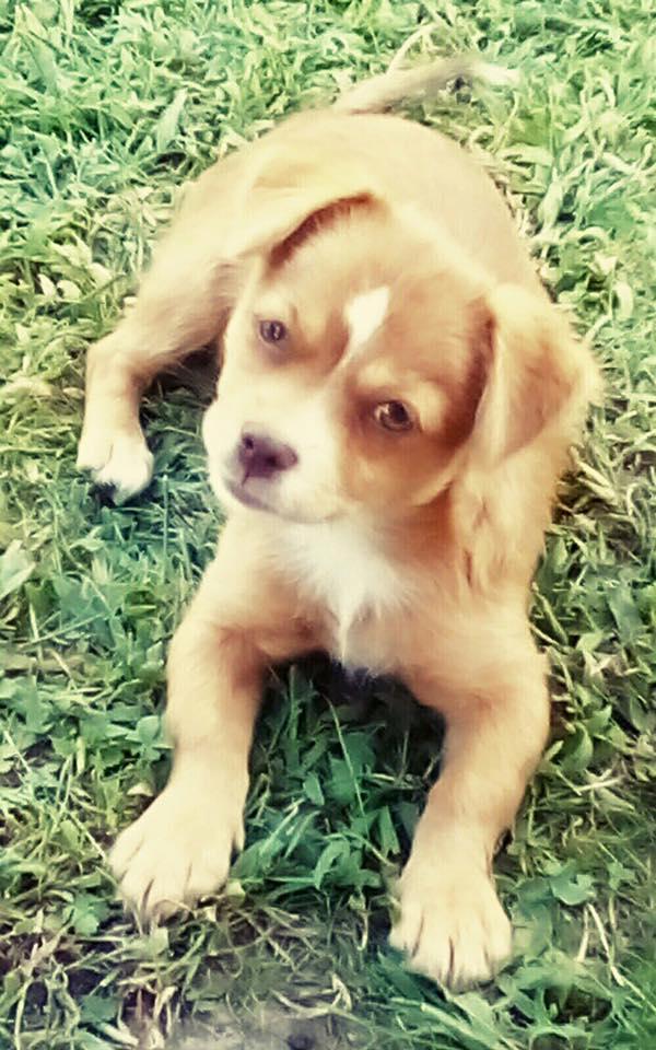 SOS Animali, scappata la cucciola Linda
