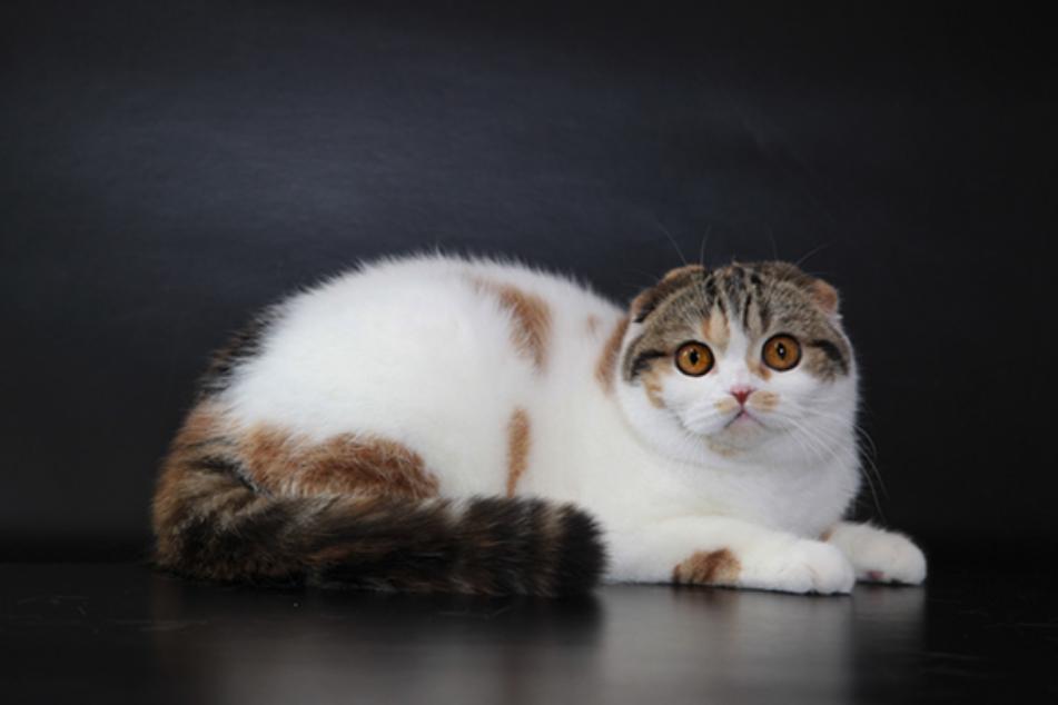 Expo felina a lido di camaiore i gatti pi belli e rari - I mobili piu belli del mondo ...