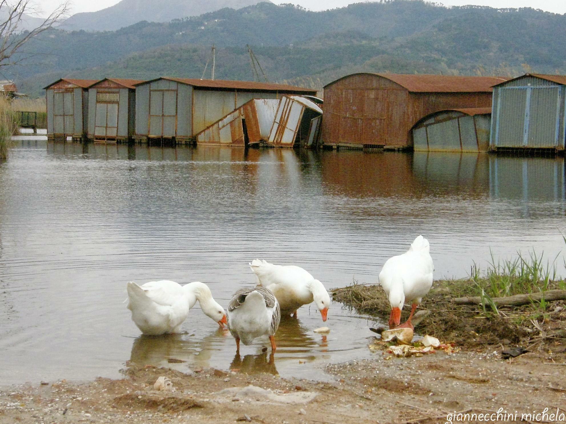 Il consiglio regionale chiede il risanamento di padule e lago di Massaciuccoli
