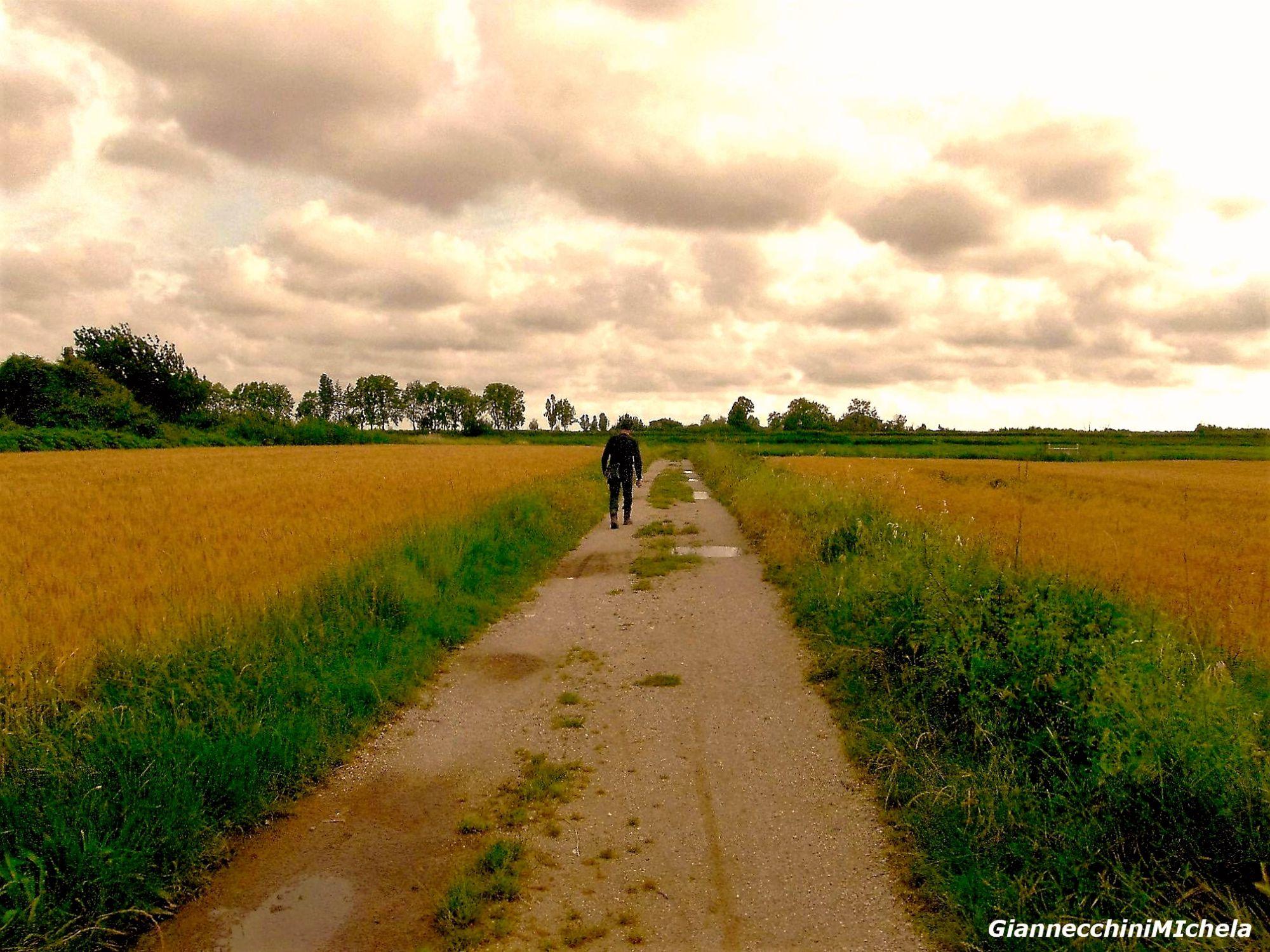 #stocoicontadini, la campagna lucchese nella più grande  fattoria mai aperta in città