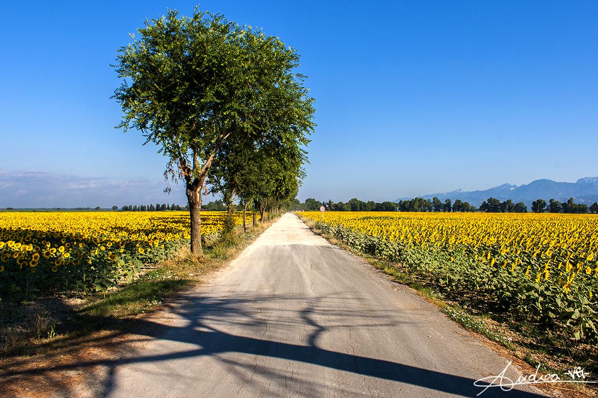 Toscana Ovunque Bella, la regione tra le mete più richieste e visitate