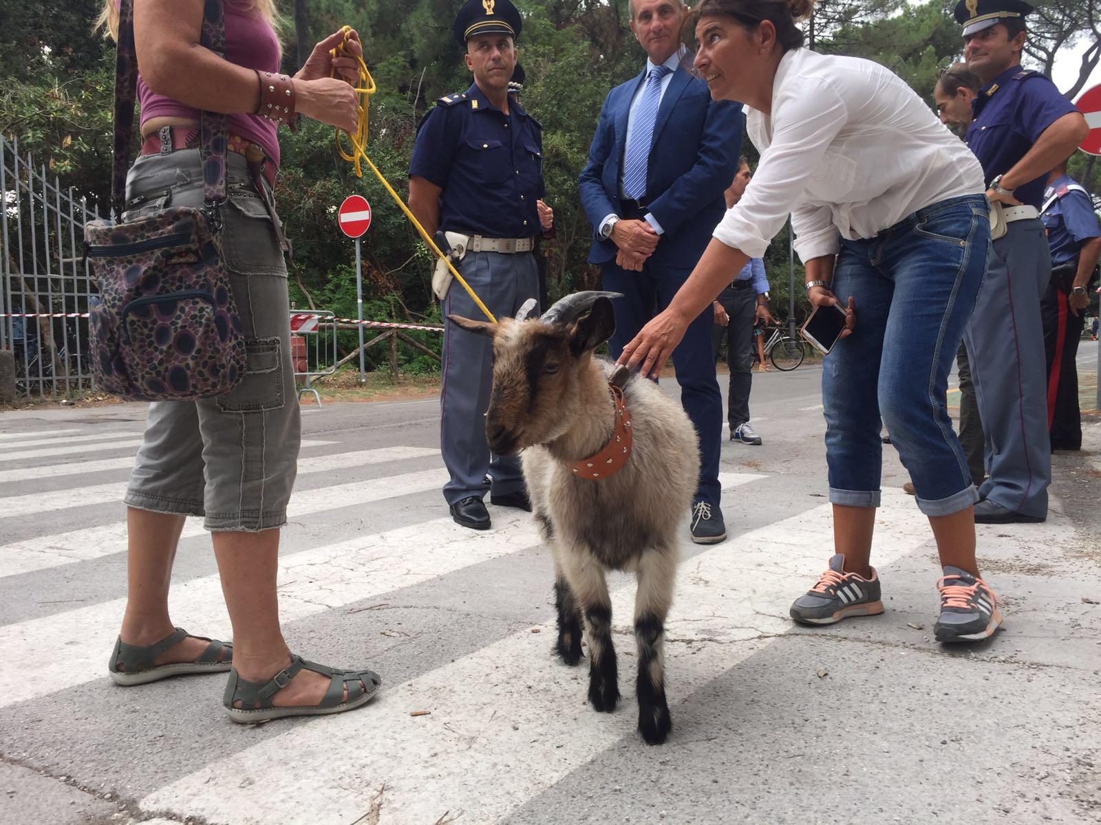 Alla Versiliana con una capra al guinzaglio