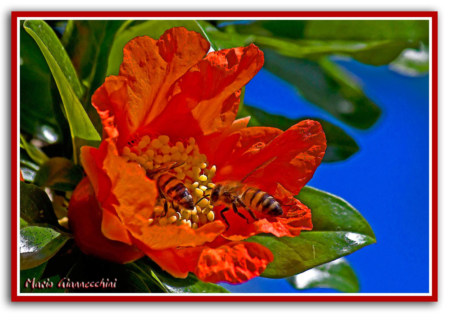 Sul polline