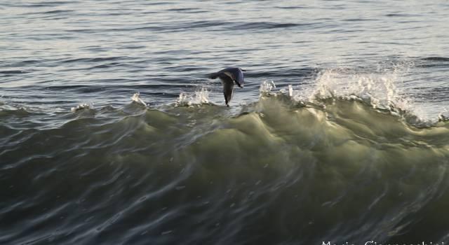 A pelo d'acqua