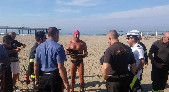 """""""Una bomba sulla spiaggia"""", ma è un falso allarme"""