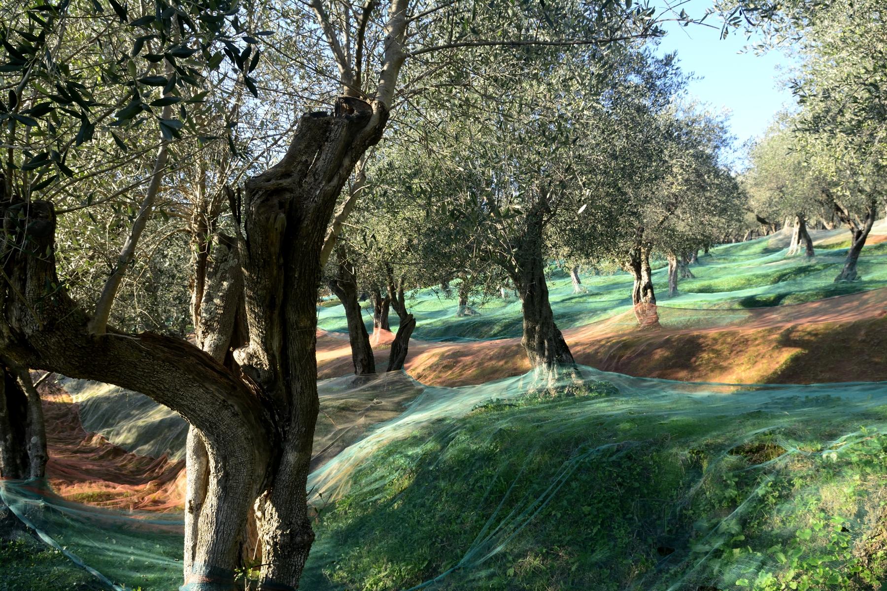 Assaggi d'Autunno. Escursione sul sentiero dell'olio d'oliva