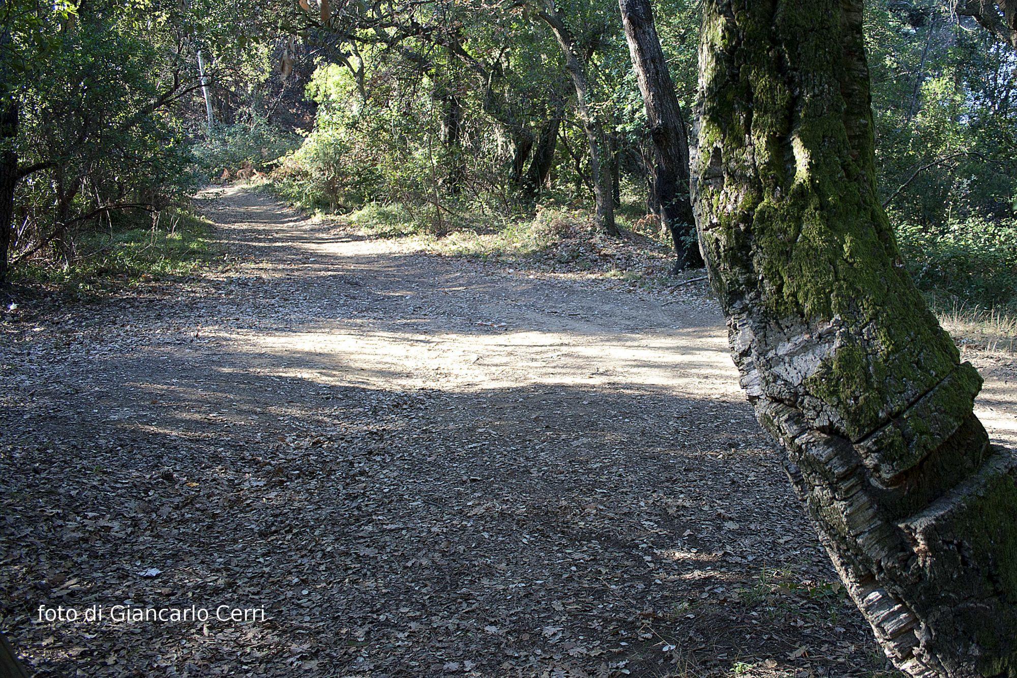 Un albero per amico, il programma del Parco San Rossore