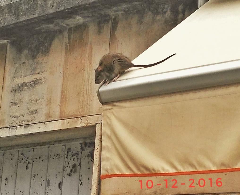 """""""I padroni del centro storico sono i topi"""", proteste dei residenti"""