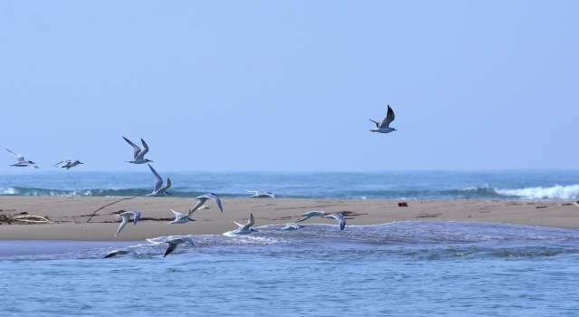 Escursione di birdwatching alla foce del Serchio