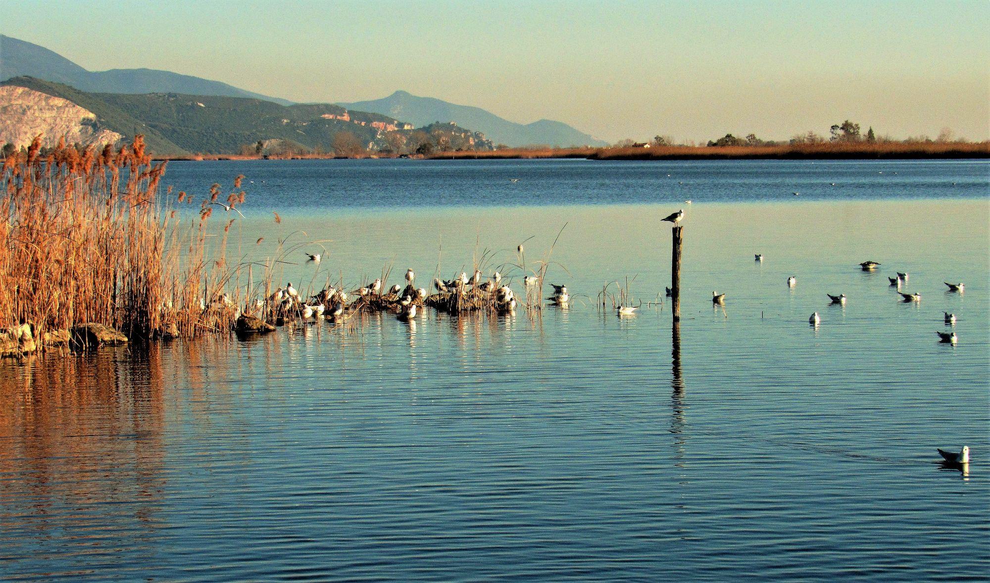 Un lago di gabbiani