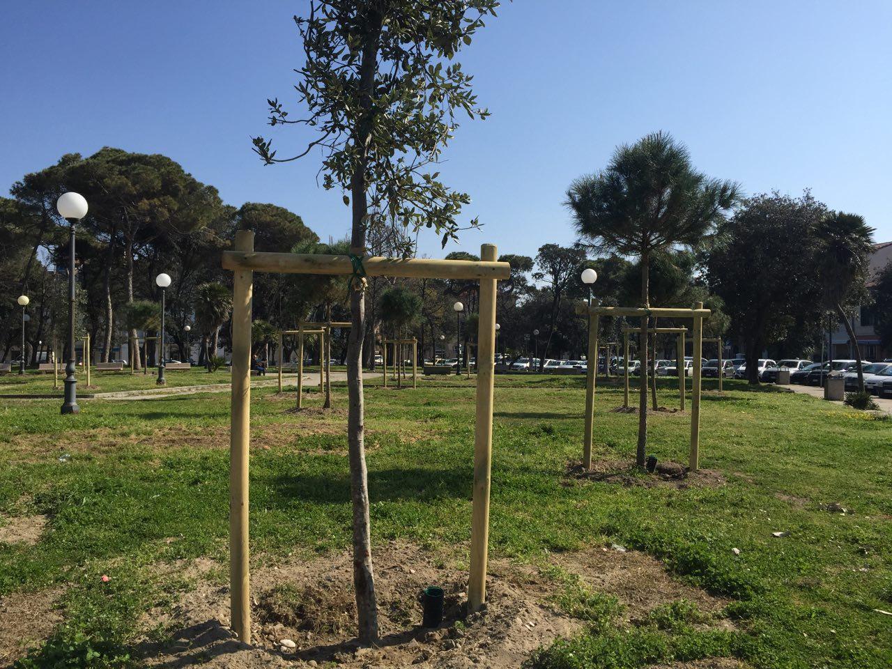 76 nuovi alberi per piazza D'Azeglio e la Passeggiata