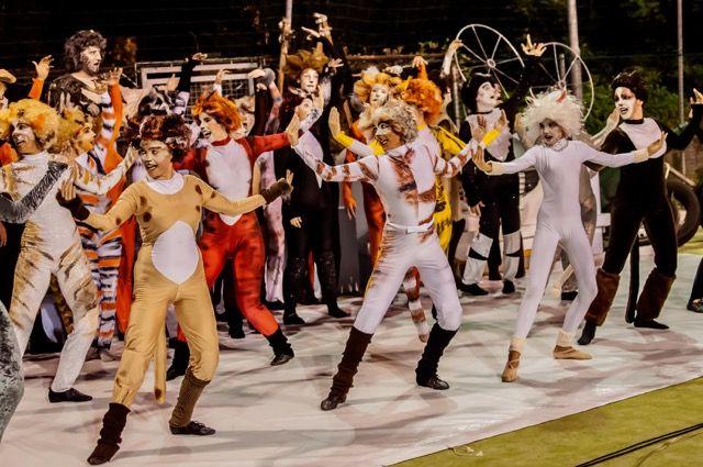 """Musical """"Notte da Jellicle"""" al teatro comunale Giacomo Puccini"""