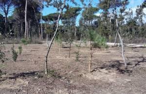 pineta versiliana