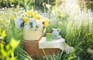 picnic natura prato scampagnata