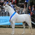 Foto Best in Show Arte del Cavallo