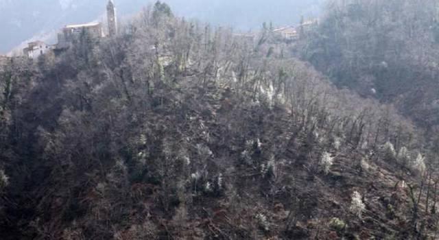 In partenza  il progetto per il ripristino dei boschi danneggiati dagli incendi