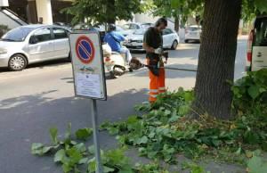 interventi manutenzione e potatura verde