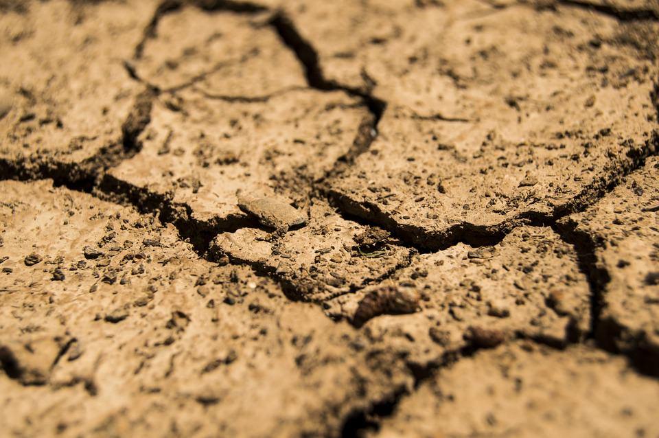 Via libera per la richiesta di rimborso danni per  20 milioni dell'agricoltura lucchese