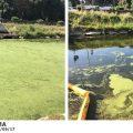 La Fossa dell'Abate torna a splendere, rimosse migliaia di alghe