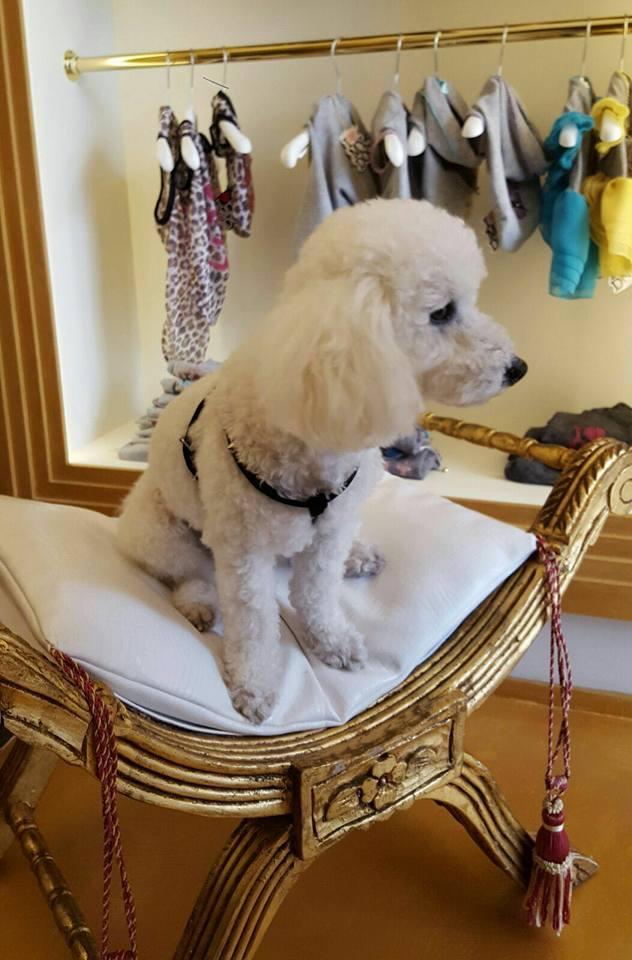 A Pietrasanta una nuova boutique di lusso per animali domestici