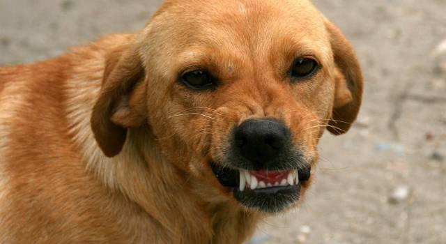 Va a trovare l'amico, viene semisbranato dal cane