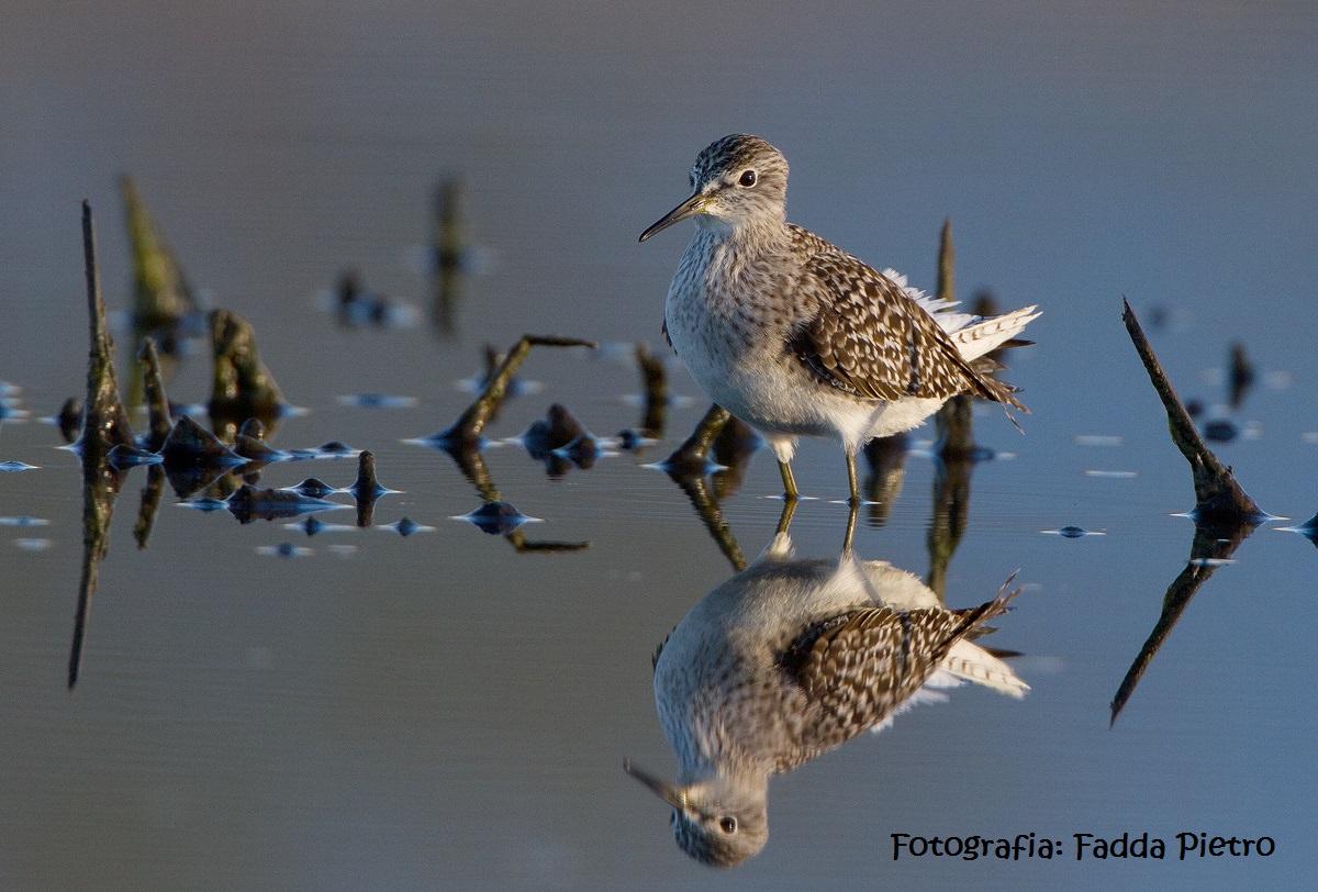 Eurobirdwatching: Giornate europee per l'osservazione dell'avifauna