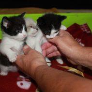 Emergenza gatti: a Pistoia il primo corso per diventare balia