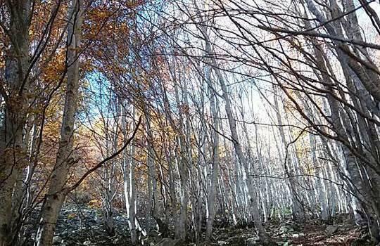 Quasi finito l'intervento di ripristino dei boschi danneggiati nel marzo 2015