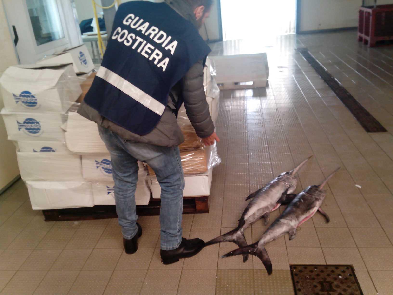 La Guardia costiera della Toscana a tutela della filiera ittica. Sequestri e 90mila euro di sanzioni
