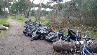 Pineta invasa dai rifiuti, volontari all'opera