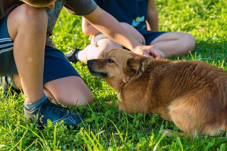 bambini-e-cani