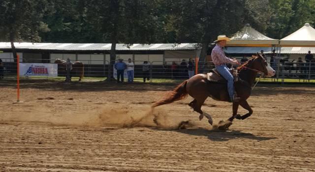 Due giorni assieme ai cavalli più belli del mondo nel parco della Versiliana