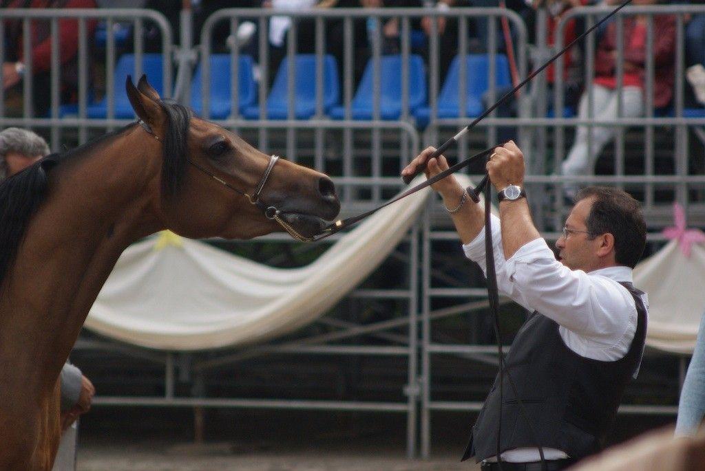 L'Arte del Cavallo e il Versilia Western Show alla Versiliana