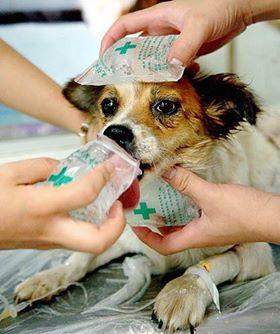 Massarosa, un fondo contro i maltrattamenti di animali