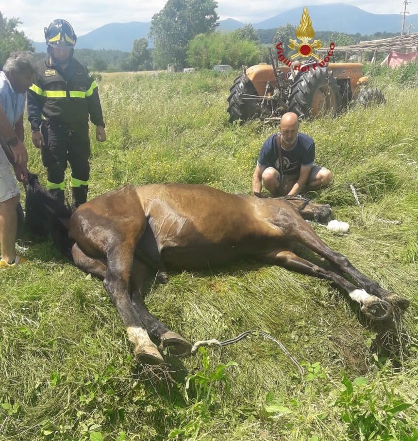 Cade in un fosso, cavallo salvato dai pompieri di Lucca