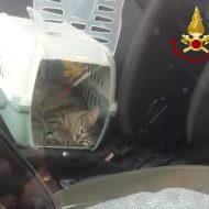 Scendono dall'auto, i gatti premono il pulsante della chiusura e restano fuori