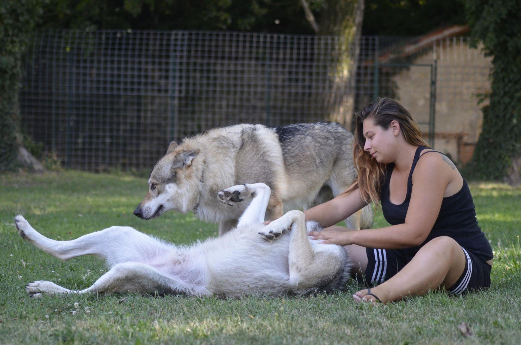 Più lupo o cane da compagnia? Per capirlo basta uno sguardo