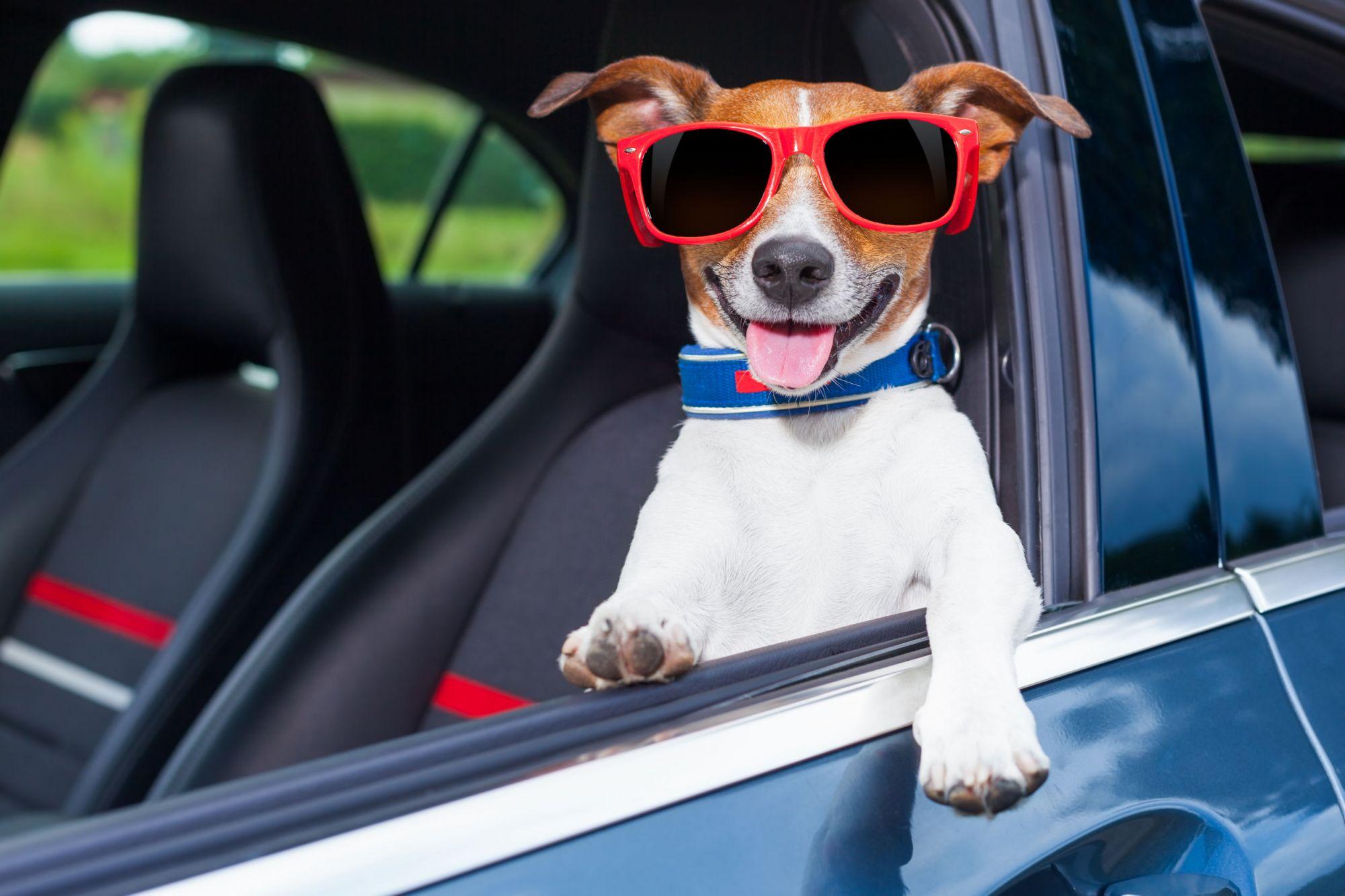 Si avvicinano le vacanze, viaggiare sicuri in auto col cane: qualche consiglio