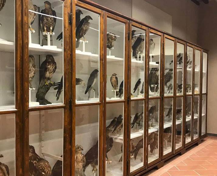 collezione ornitologica Gragnani Rontani