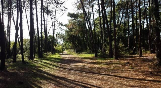 Il futuro dell'area protetta, nuovo incontro sul piano integrato del Parco