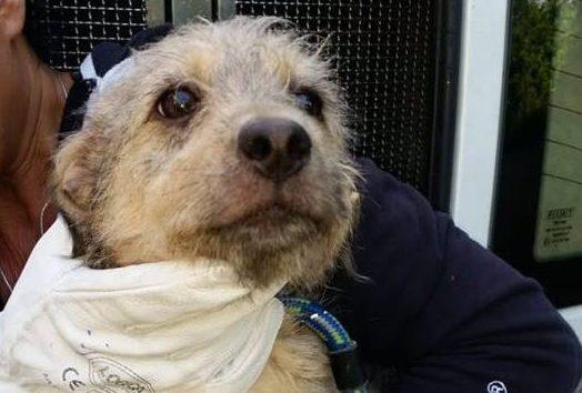 La Polizia Municipale salva 8 piccoli cani abbandonati: ora si trovano in un rifugio, pronti per essere adottati
