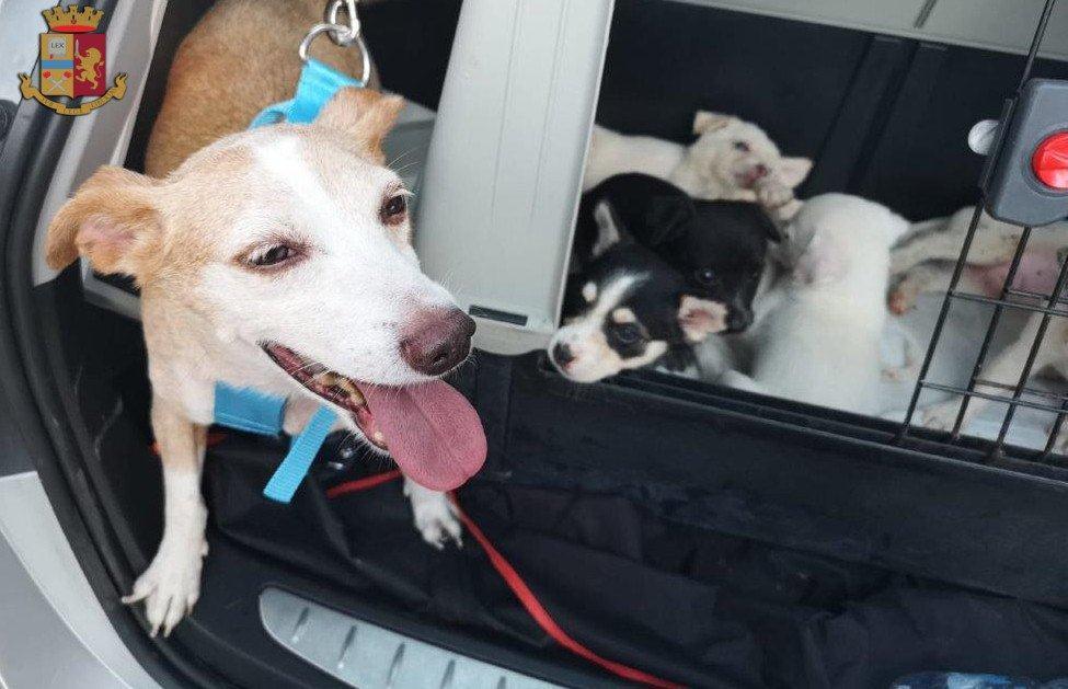 Abbandonati in A1: 7 cuccioli di cane con la mamma salvati dalla Polstrada