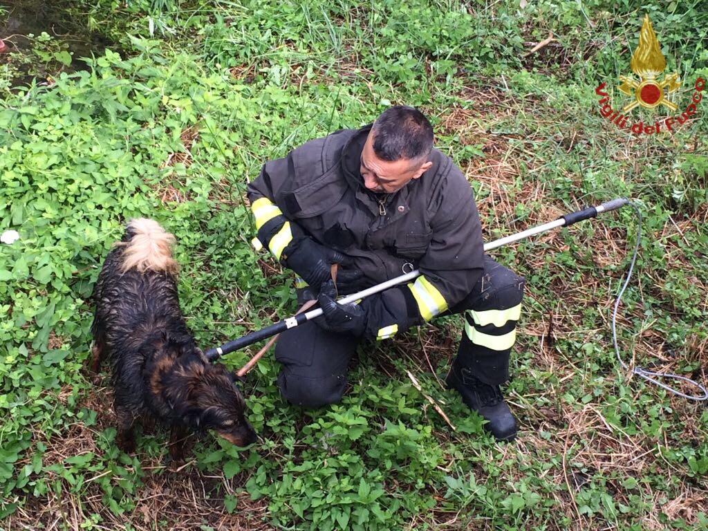 Salvato dai pompieri: il povero cane era caduto in un torrente