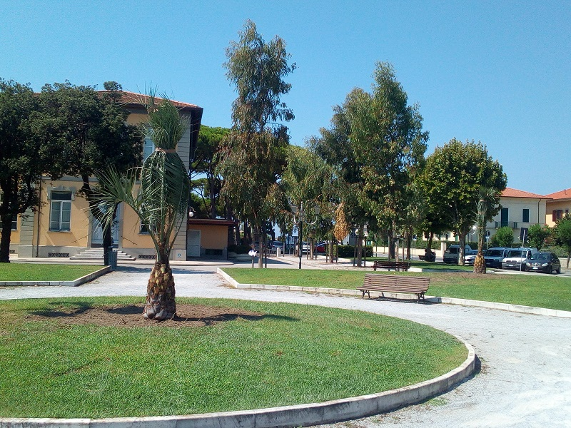 Decoro urbano, piantumazione di undici palme a Forte dei Marmi