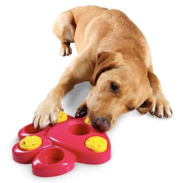 Clever Dog, all'Asd El Perro Loco i giochi dedicati all'intelligenza del cane: entra nel club!
